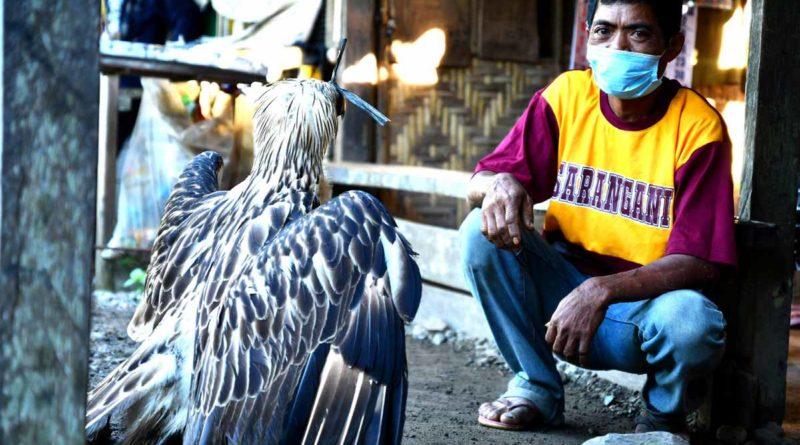PHILIPPINEN MAGAZIN - NACHRICHTEN - Philippinen Adler in Sarangai gerettet