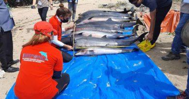 PHILIPPINEN MAGAZIN - NACHRICHTEN - Illegales Dynamit-Fischen tötete Delfine in Camarines Sur
