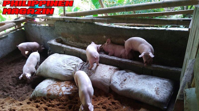 PHILIPPINEN MAGAZIN - NACHRICHTEN - Nahrungsmittelkrise in den Philippinen