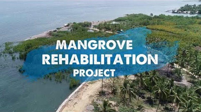 PHILIPPINEN MAGAZIN - VIDEOSAMMLUNG - Projekt zur Mangroven-Sanierung