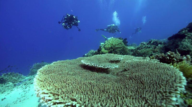 PHILIPPINEN MAGAZIN - VIDEOSAMMLUNG - Tauchen an der Insel Apo - März 2021