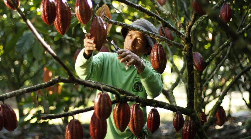 PHILIPPINEN MAGAZIN - REISEN - Leitfaden zu philippinischer Schokolade