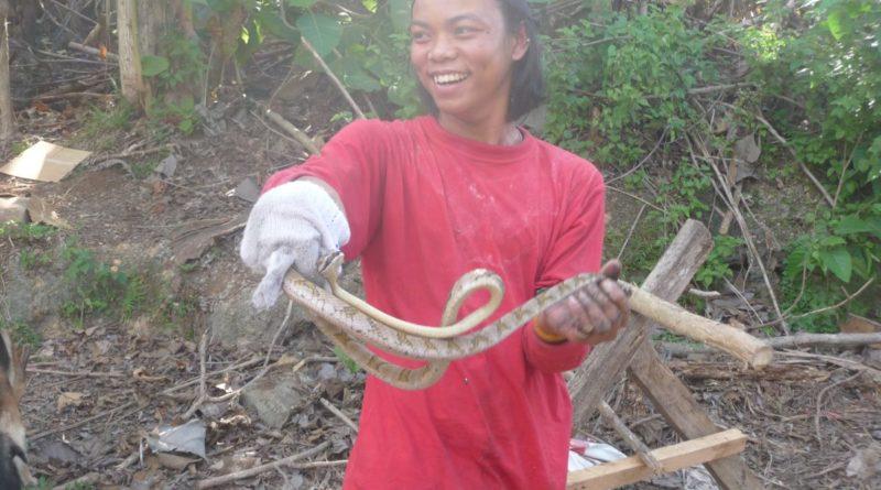 PHILIPPINEN MAGAZIN - DER PHILIPPINISCHE EXPAT KLUB - Gruppe Flora & Fauna - Schlangen am Haus