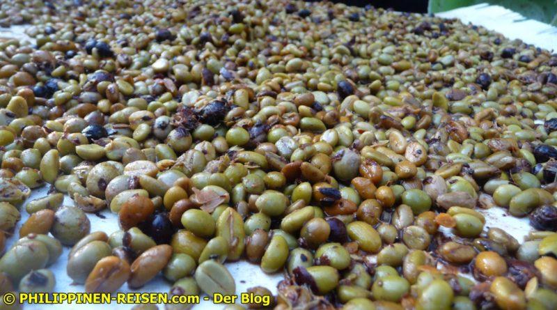 PHILIPPINEN MAGAZIN - DER PHILIPPINSICHE EXPAT KLUB - GRUPPE ESSEN & TRINKEN - Wir machen unseren Kaffee selber - Teil I