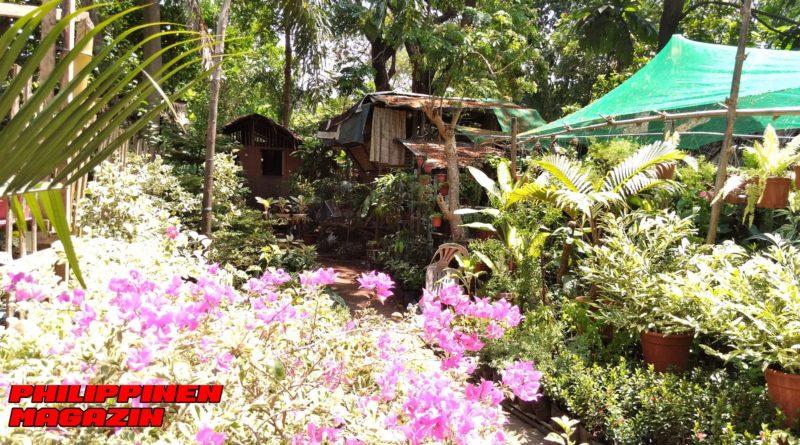 PHILIPPINEN MAGAZIN - FOTO DES TAGES - Blumengärtnereien mitten in der Stadt Foto von Sir Dieter Sokoll für PHILIPPINEN MAGAZIN