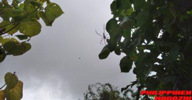 PHILIPPINEN MAGAZIN - FOTO DES TAGES - Spinnen zwischen den Bäumen Foto von Sir Dieter Sokoll für PHILIPPINEN MAGAZIN