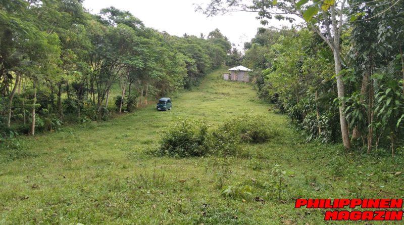 PHILIPPINEN MAGAZIN - FOTO DES TAGES - Eine grüne Straße Foto von Sir Dieter Sokoll für PHILIPPINEN MAGAZIN