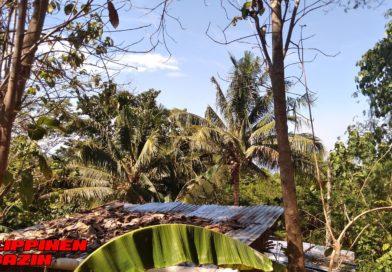 PHILIPPINEN MAGAZIN - FOTO DES TAGES - Kokospalmen im Garten Foto von Sir Dieter Sokoll für PHILIPPINEN MAGAZIN