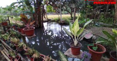 PHILIPPINEN MAGAZIN - FOTO DES TAGES - HAUS MIT KLEINEM TEICH AN DEN REISFELDERN Foto von Sir Dieter Sokoll für PHILIPPINEN MAGAZIN