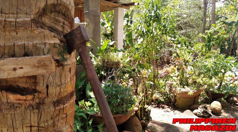 PHILIPPINEN MAGAZIN - FOTO DES TAGES - Das Ende einer Kokospalme Foto von Sir Dieter Sokoll für PHILIPPINEN MAGAZIN