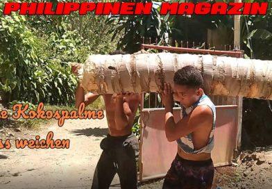 PHILIPPINEN MAGAZIN - VIDEOKANAL - Eine Kokospalme muss weichen Foto & Video von Sir Dieter Sokoll für PHILIPPINEN MAGAZIN