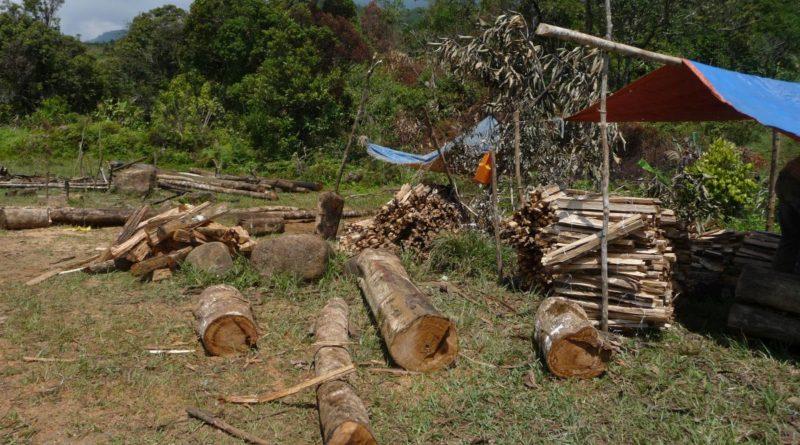 PHILIPPINEN MAGAZIN - DER PHILIPPINISCHE EXPAT KLUB - Gruppe Land 6 Leute, - Familie macht Feuerholz Foto von Sir Dieter Sokoll für PHILIPPINEN MAGAZIN