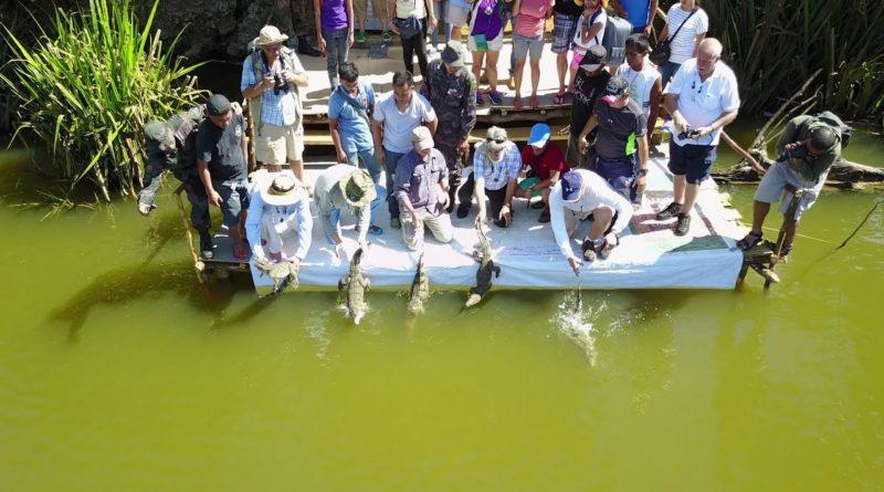 PHILIPPINEN MAGAZIN - VIDEOSAMMLUNG - Paghungawan Marsh Philippine Crocodile Conservation Einführung