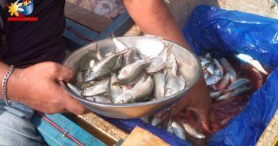 PHILIPPINEN MAGAZIN - BLOG - Der mobile Fischhändler kommt täglich Foto von Sir Dieter Sokoll für PHILIPPINEN MAGAZIN