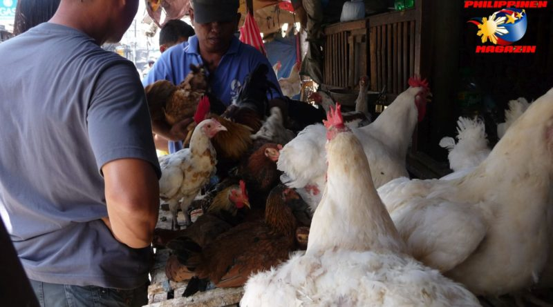 PHILIPPINEN MAGAZIN - DER PHILIPPINISCHE EXPAT KLUB - GRUPPE LAND & LEUTE - Auf dem Geflügelmarkt Foto von Sir Dieter Sokoll