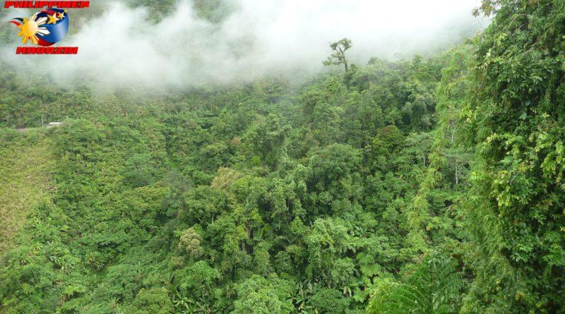 PHILIPPINEN MAGAZIN - FOTO DES TAGES - Im Dschungel von Southern Leyte Foto von Sir Dieter Sokoll