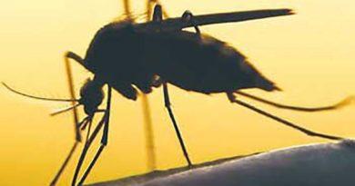 PHILIPPINEN MAGAZIN - NACHRICHTEN - Dengue-Fälle in Bauio um 156 Prozent gestiegen