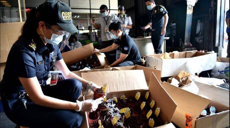 PHILIPPINEN MAGAZIN - NACHRICHTEN - Fleischfressende Pflanzen am NAIA beschlagnahmt