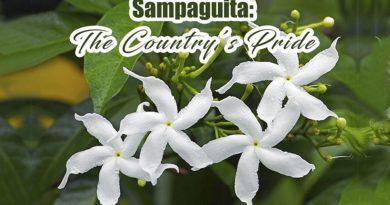 PHILIPPINEN MAGAZIN - TAGESTHEMA: Die Nationalblume Sampaguita