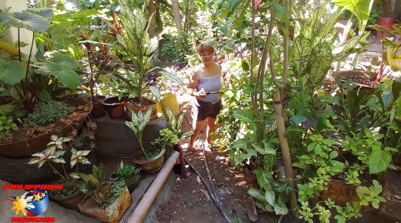 PHILIPPINEN MAGAZIN - FOTO DES TAGES - Unser Blumen-Dschungelgarten Foto von Sir Dieter Sokoll