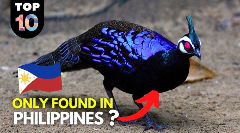 PHILIPPINEN MAGAZIN - VIDEOSAMMLUNG - 10 seltene Tiere der Philippinen - 1