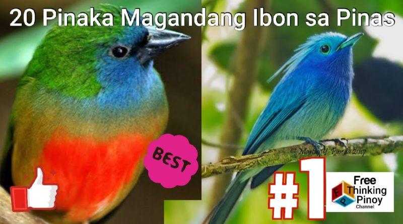 PHILIPPINEN MAGAZIN - VIDEOSAMMLUNG - Die 20 schönsten Vögel auf den Philippinen