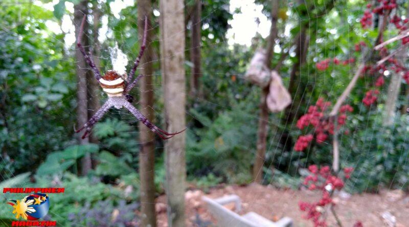 PHILIPPINEN MAGAZIN - FOTO DES TAGES - Spinne im Netz Foto von Sir Dieter Sokoll
