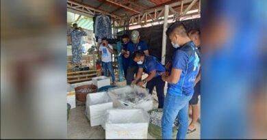 PHILIPPINEN MAGAZIN - NACHRICHTEN - Lebende Korallen im Wert von 7,26 Millionen Peso beschlagnahmt