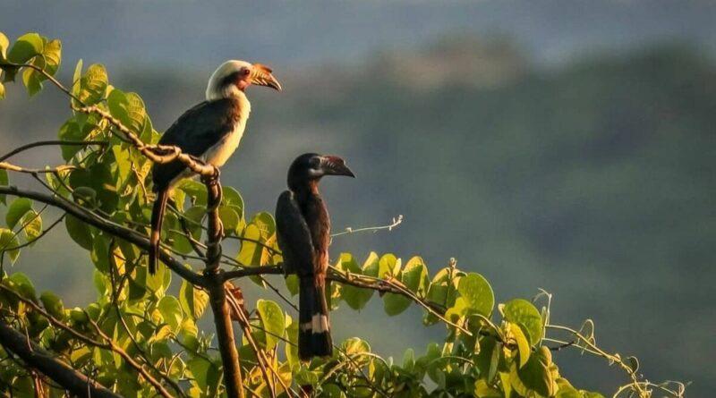 PHILIPPINEN BLOG - Seltene endemische Wildtiere gedeihen im Masungi Georeserve
