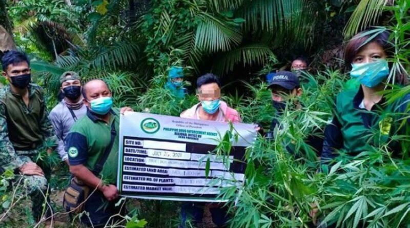 PHILIPPINEN MAGAZIN - NACHRICHTEN - Marihuanaplantage in Asturias vernichtet