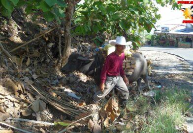 PHILIPPINEN MAGAZIN - FOTO DES TAGES - Kleinbauer mit dem Wasserbüffel auf dem Weg nach Hause Foto von Sir Dieter Sokoll