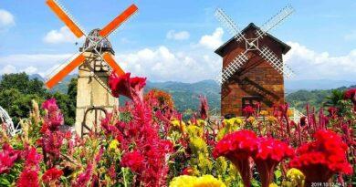 PHILIPPINEN MAGAZIN - TAGESTHEMA - Sirao Flower Garden - Klein-Amsterdam