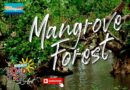 SIGHTS OF CAGAYAN DE ORO CITY & NORTHERN MINDANAO - Mangrove Forest in Camiguin
