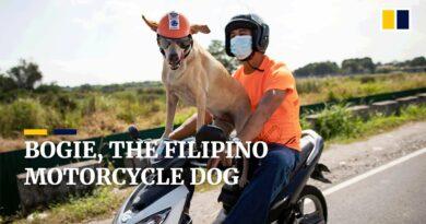 PHILIPPINEN MAGAZIN - VIDEOSAMMLUNG - Bogie, der motorradfahrende Hunde