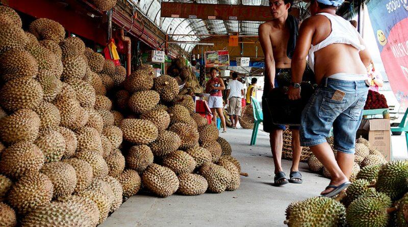 PHILIPPINEN MAGAZIN - REISEN - LEITFADEN ZU - Leitfaden zu Durian