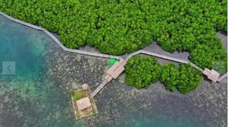 PHILIPPINEN MAGAZIN - NACHRICHTEN - Nordsamar öffnet den Lalaguna Mangrove Eco Park wieder für Touristen