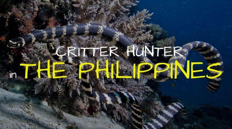 PHILIPPINEN MAGAZIN - VIDEOSAMMLUNG - Meeresleben auf den Philippinen