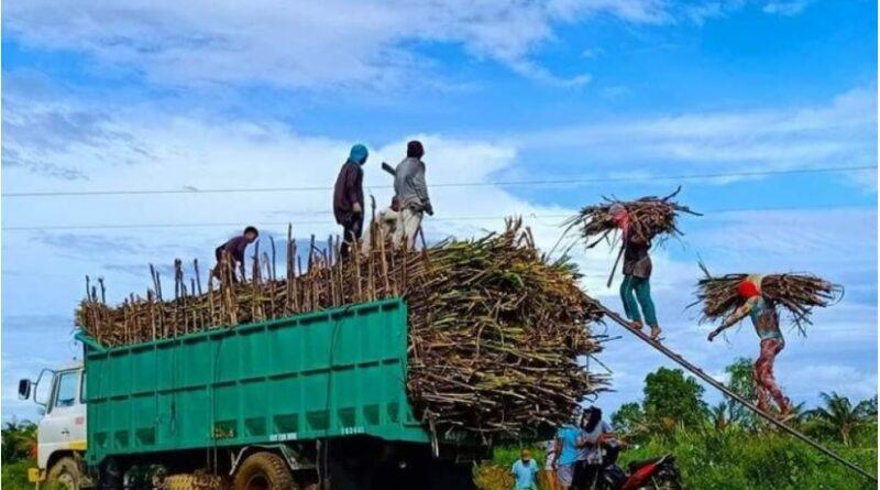"""PHILIPPINEN MAGAZIN - NACHRICHTEN - Die Rückkehr der """"Sacada"""" markiert den Beginn der Zuckerrohrernte"""