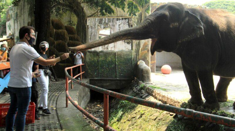 PHILIPPINEN MAGAZIN - NACHRICHTEN - Der neue Zoo in Manila wird Weltklasse