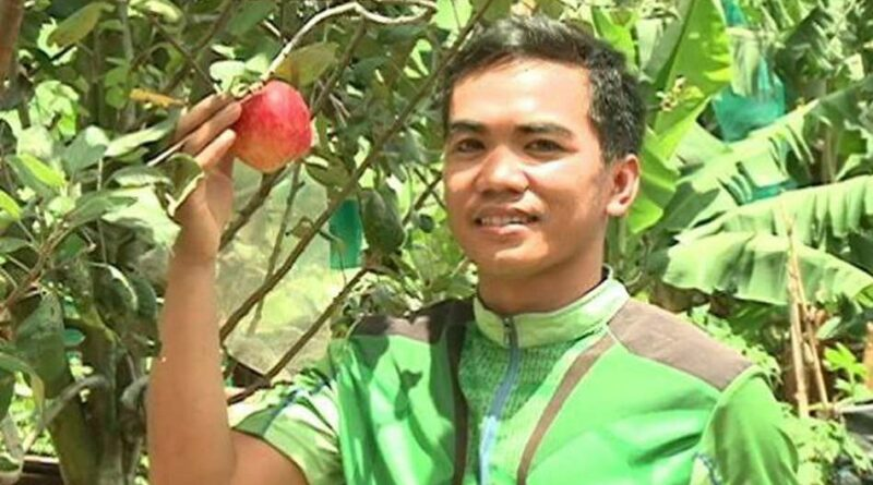 PHILIPPINEN MAGAZIN - NACHRICHTEN - College-Student pflanzt erfolgreich ersten Apfelbaum in Davao del Sur