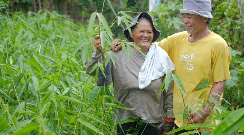 PHILIPPINEN MAGAZIN - NACHRICHTEN - CENRO pflanzt 10.000 Bambusetzlinge an den Ufern des Nuangan