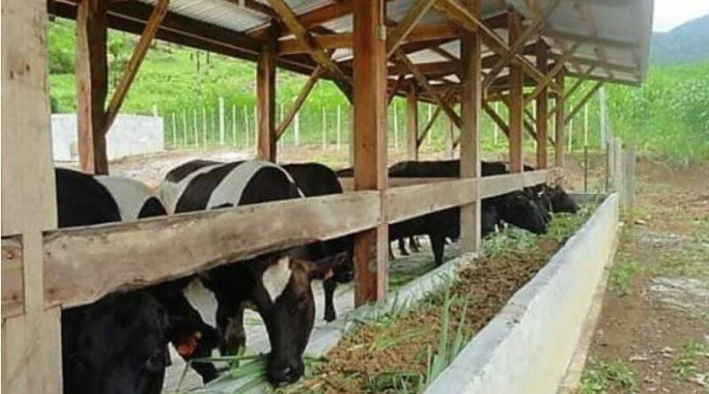 PHILIPPINEN MAGAZIN - NACHRICHTEN - Molkerei in Camiguin verteilt Milch an 2.777 unterernährte Kinder