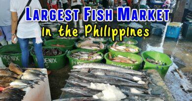 PHILIPPINEN MAGAZIN - VIDEOSAMMLUNG - Navotas Fischereihafen in Metro Manila